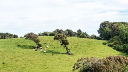 Insel Chiloe-101