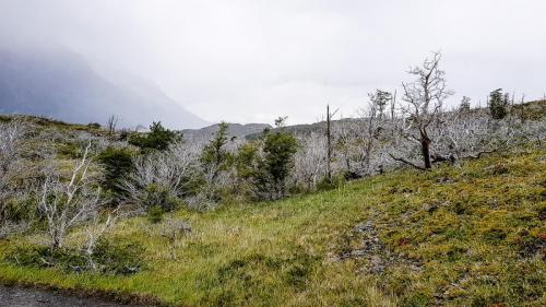 Torres del Paine-108