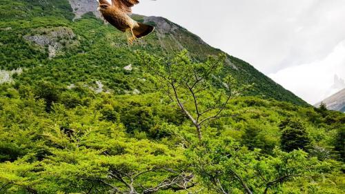 Torres del Paine-112