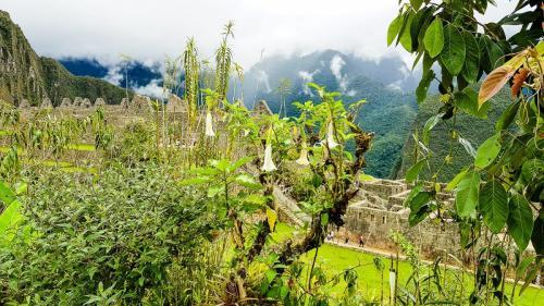Macchu Picchu-112